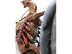 Detail images: Aschenbecher mit Wiener Bronze eines orientalischen Jägers auf Kamel