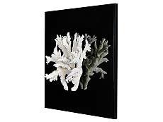 Detailabbildung: Feiner, weißer Korallenzweig