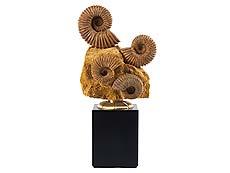 Detailabbildung: Gruppe Acanthoceras Ammoniten