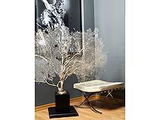 Detailabbildung: Große, äußerst feine weiße Gorgonie