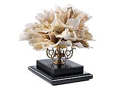 Detail images: Feine Komposition aus Riffelkorallen