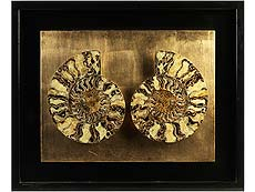 Detailabbildung: Fossiler Ammonit