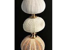 Detail images: Elegante Komposition aus Seeigeln