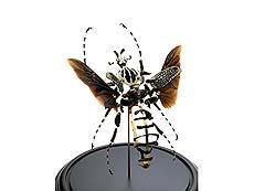 Detail images: Fragmentierter Goliath-Käfer
