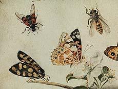 Detail images: Jan van Kessel d. Ä., um 1626 – 1679