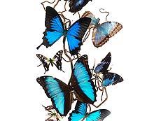 Detail images: Zehn drapierte Schmetterlinge auf einem Nussbaumzweig