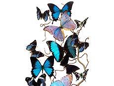 Detailabbildung: 17 drapierte Schmetterlinge auf einem Nussbaumzweig