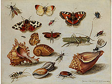 Jan van Kessel the Elder, INSECTS, SHELLS AND BUTTERFLIES