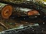 Detail images: Nicolaas Johannes Roosenboom, 1805 Schellingwouw - 1880 Assen