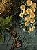 Detail images:  Jules d'Hoop, Maler des 19. Jahrhunderts