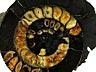 Detail images: Großer Ammonit in zwei Teilen