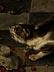 Detailabbildung: Frans Snyders, 1579 Antwerpen – 1657 ebenda, Werkstatt