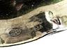 Detail images: Büttenträger