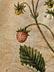 Detail images: Jacques Le Moyne de Morgues, um 1533 Frankreich - 1588 London, Kanada, zug.