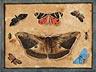 Detail images: Maler in der Nachfolge von Georgius Hoefnagel (1542-1600), oder Maria Sibylla Merian (1647-1717)