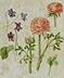 Detail images: Blumenmalerei in Pergament in Art der Nachfolge von Maria Sibylla Merian, 1647 – 1717