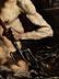 "Detail images: Giovanni Francesco Barbieri, genannt ""Il Guercino"" 1591 Cento – 1666 Bologna, und Werkstatt"
