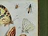 Detail images: † Jan van Kessel I, um 1626 – 1679