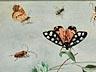 Detailabbildung: † Jan van Kessel I, um 1626 – 1679