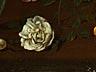 Detail images: Fede Galizia, 1578 Mailand – 1630 ebenda