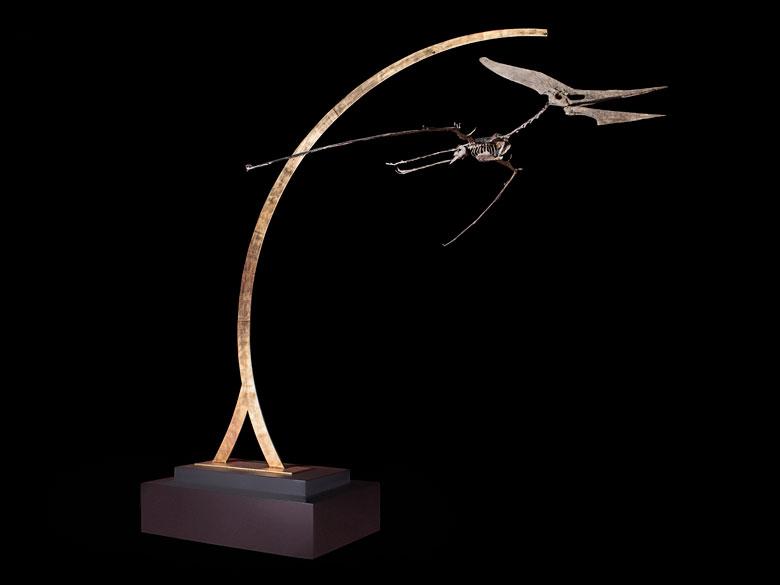 Vollständiges Skelett eines Pteranodon Longiceps im Flug