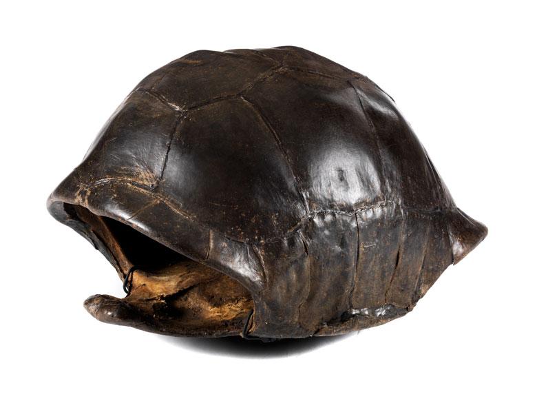 Panzer einer Riesenschildkröte