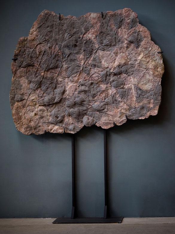 Fossil einer Seelilie bzw. Haarsterne