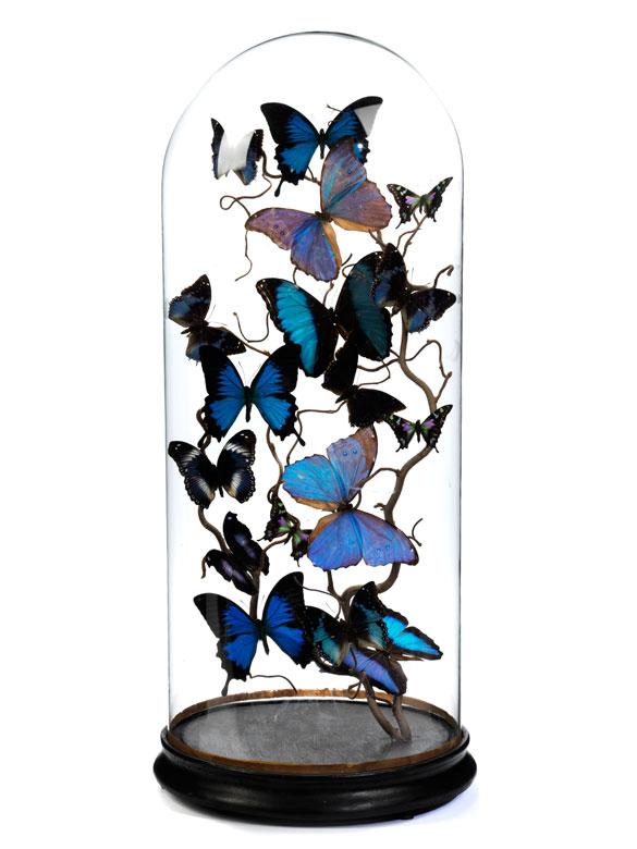 17 drapierte Schmetterlinge auf einem Nussbaumzweig