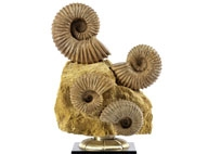 Fossilien, Meteoriten, Saurier & Kuriositäten Auction December 2017