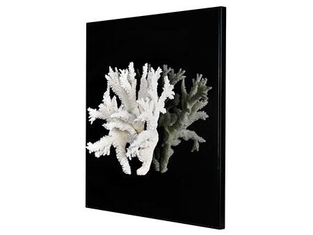 Feiner, weißer Korallenzweig