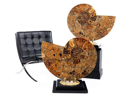 Sehr großer, dekorativer Pachidiscus Ammonit in zwei Teilen