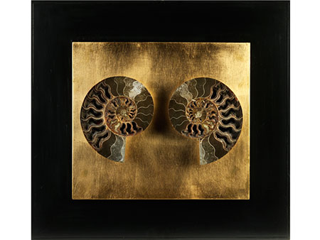 Dekorativer fossiler Ammonit