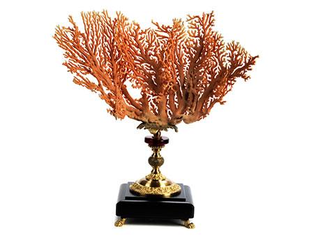 Aussergewöhnlicher Zweig einer Distichopora Koralle
