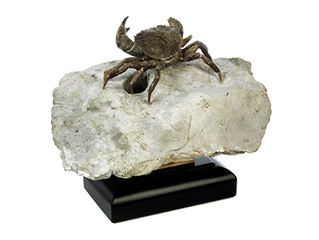 Bemerkenswert gut erhaltene fossile Krabbe