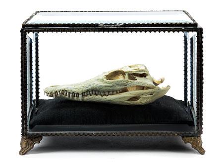 Kleiner Schädel eines Nil-Krokodils