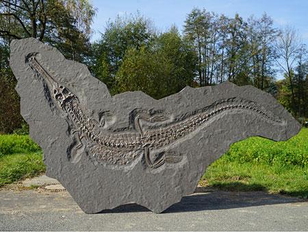 Hochseekrokodil (Steneosaurus bollensis)