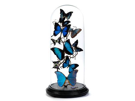 Zehn drapierte Schmetterlinge auf einem Nussbaumzweig