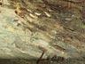 Detail images: Félix Ziem, 1821 Beaune – 1911 Paris