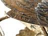 Detail images: Paar Londoner Silberhähne