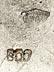 Detail images: Beeindruckende Silberkanne