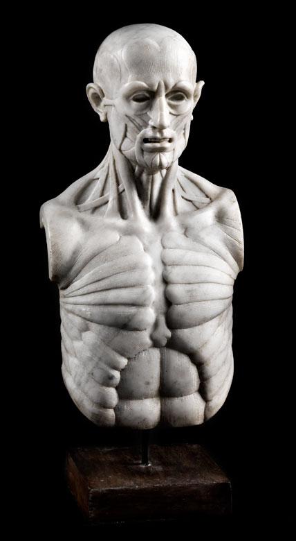 Marmorskulptur in Form eines anatomischen Modells