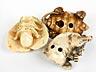 Detail images: Drei japanische Elfenbeinschnitzobjekte