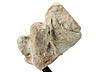 Details: Fragment eines römischen Reliefs