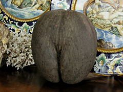 Coco de Mare
