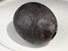 Kokos-Pulverhorn