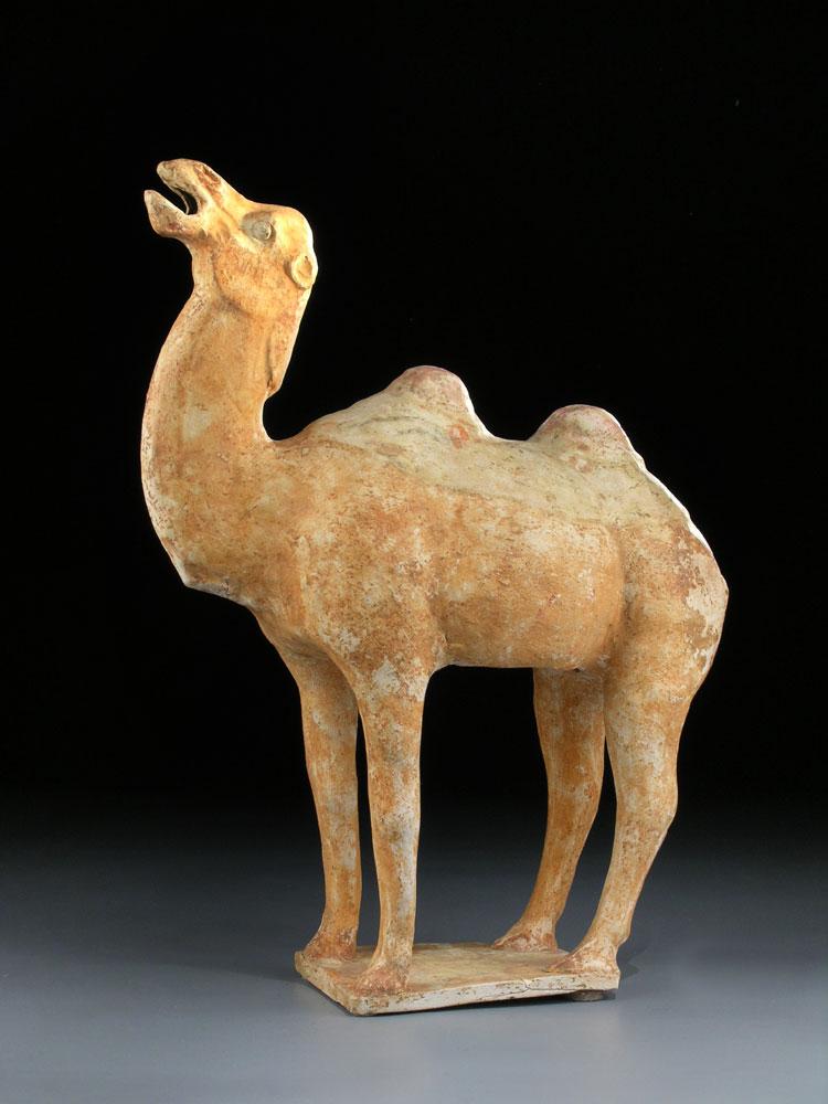 Kamel der Tang-Dynastie