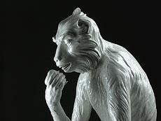 Detail images: Meißener Porzellanfigur des fressenden Affen nach dem Modell von Johann Gottlieb Kirchner