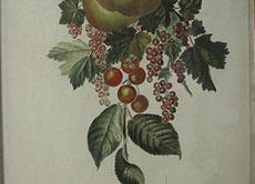 Detail images: P. F. le Grand