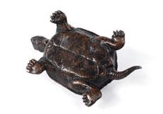 Detail images: Bronzeguss einer Schildkröte