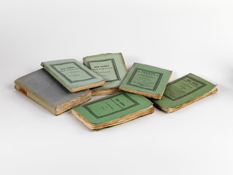 hegetschweiler j sammlung von schweizer pflanzen nach der natur auf stein gezeichnet von j d. Black Bedroom Furniture Sets. Home Design Ideas